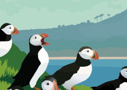 Craigleith Puffins Detail