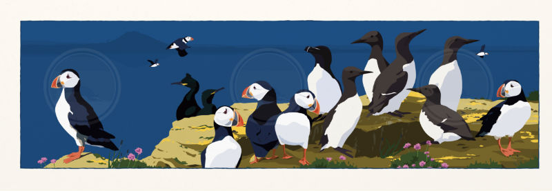 Puffins and Friends Panorama